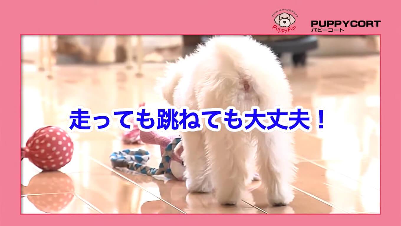 モコちゃんの快適な暮らし PUPPYCORT