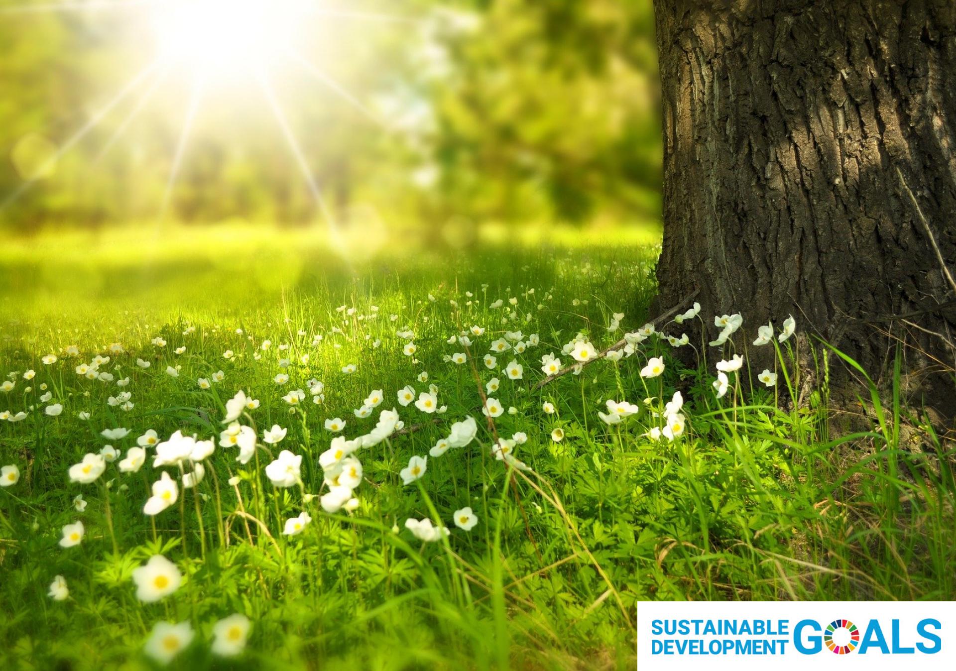 小花がたくさんある豊かな自然の風景